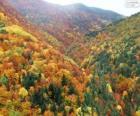 Las w kolory jesieni
