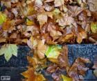 Mokrych liści