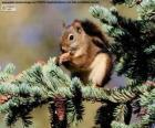 Wiewiórka pospolita na drzewie