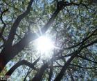 Oddziały i słońce