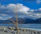Zmarłe drzewo w pobliżu jeziora