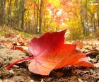 Jesień las liść