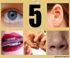 Pięciu zmysłów