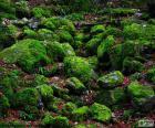 Kamienie pokryte mchem w lesie w zimie