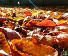 Suchych liści jesienią