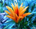 Egzotyczny kwiat pomarańczowy