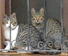 Dwa koty w oknie
