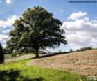 Drzewo w zaorane pole