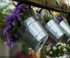 Kwiaty w doniczkach metalu