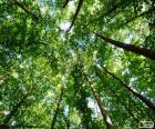 Wierzchołki drzew w gęsty las