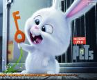 Snowball, biały królik