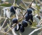 Czarny olive branch