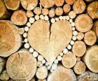 Tułowia w kształcie serca