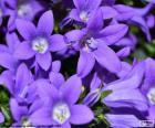 Kolor purpurowy