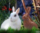 Biały królik i inne czekolady