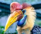 Hornbill hełmach
