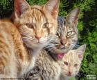 Trzy koty oglądania