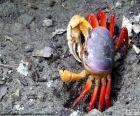 Krab kolory