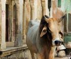 Układanka Święta krowa w Indiach
