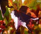 Jesień w winnicy
