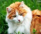 Eleganckie kota