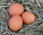 Trzy jaja