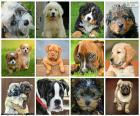 Kolaż psów