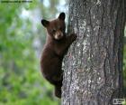 Brown bear cub wspina drzewo