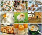 Piękny kolaż z różnych obrazów kurze jajko, wspólne żywności w diecie ludzi