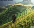 Tarasy ryżowe, Tajlandia