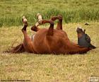 Tarzają się konia