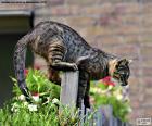 Kot na ogrodzenie