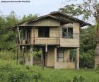 Stary dom w lesie