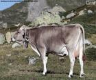 Krowa w wysokich górach
