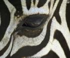 Układanka Oczu Zebra
