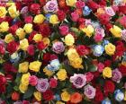 Wielobarwne róże