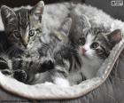 Dwa słodkie kociaki