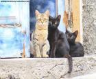 Trzy koty na kroku drzwi starego domu