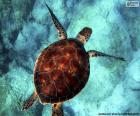 Żółw wodny w kolorze nieba