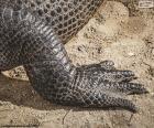 Stopa krokodyla