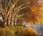 Drzewa nad jeziorem jesienią