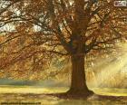 Drzewo liściaste jesienią