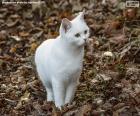 Biały kotek
