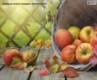 Jabłka jesienią