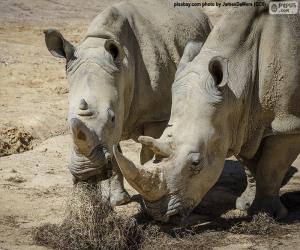 Układanka Rhino, jedzenie