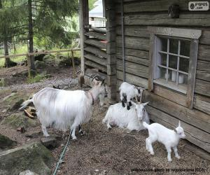 Układanka Rodzina kóz