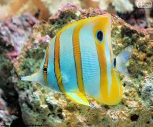 Układanka ryby motyle