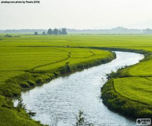Układanka Rzeki między polami ryżu