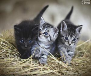 Układanka Słodkie kociaki