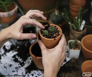 Układanka Sadzenia Kaktus